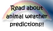 Animal Weather Predictions